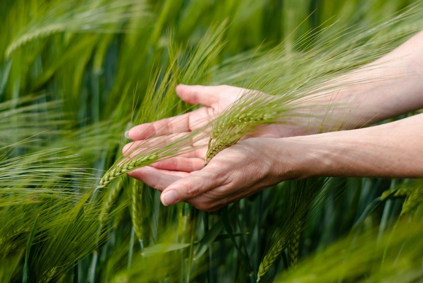 Kiedy stosować pestycydy?