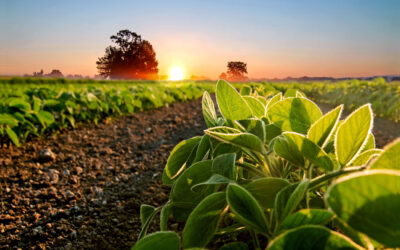 Klimat, środowisko, biznes – działamy na rzecz rolnictwa zrównoważonego
