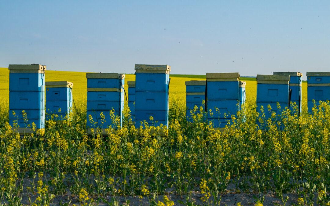 Rolnik i pszczelarz – rywale czy dobrzy współpracownicy?